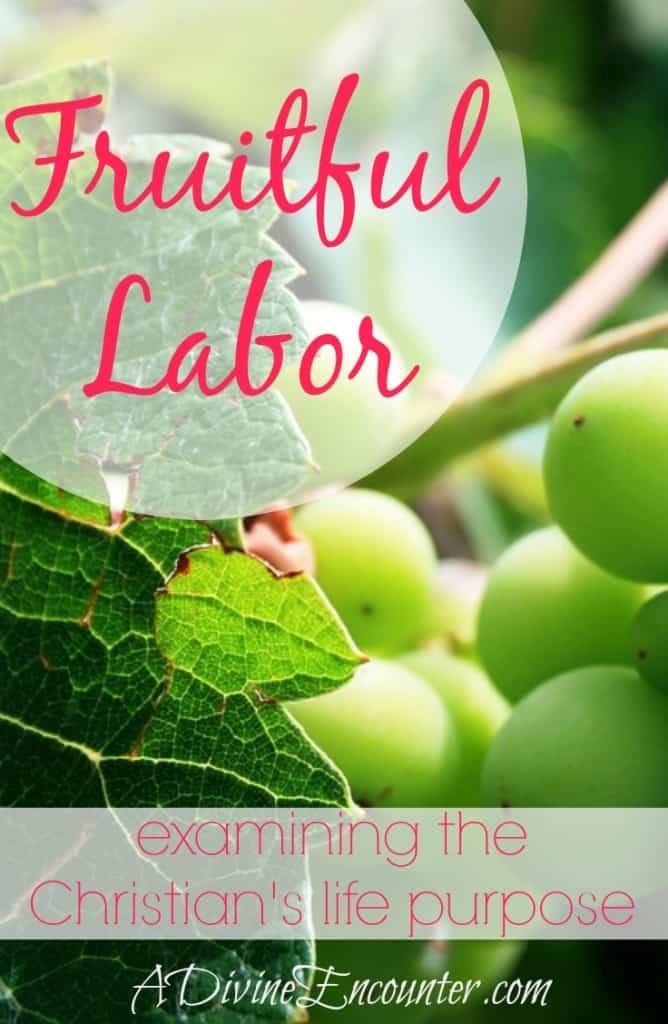 A powerful post offering simple but profound insights into Philippians 1, the purpose of life, and the source of fulfillment for Christians: fruitful labor. (Philippians 1:21-22a) http://adivineencounter.com/fruitful-labor